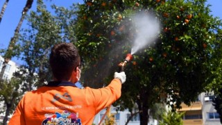 Mersin Büyükşehir, Akdeniz Meyve Sineği İle Mücadele Ediyor