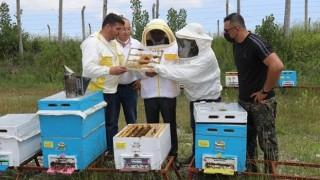 Samsun'da Ana Arı Üretim Merkezi Faaliyete Geçti