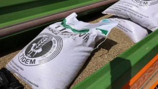 Sivas'ta ilk kenevir tohumları toprakla buluştu