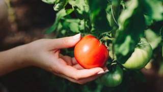 Son Bir Yılda Sebze Fiyatları Yüzde 52, Meyve Fiyatları Yüzde 42 Arttı
