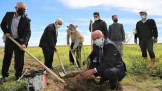 Tuşba'da Ceviz Ve Badem Fidanları Toprak İle Buluşturuluyor