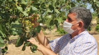 Adıyaman İl ve İlçelerinde Fıstık Verimini Artıma Projesi