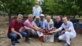 Arabacıbozköy'de Kiraz Hasadı Başladı