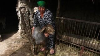 Küçükbaş hayvan üretiminde verimliliği ve sürdürülebilirliği artırmaya yönelik proje başladı