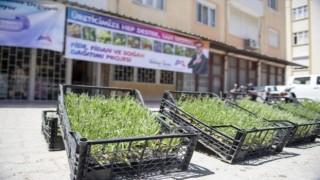Mersin'de Kıraç Topraklar Lavanta Fideleriyle Renklenecek