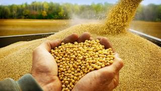Samsun Çiftçisine 18,4 Milyon Yağlı Tohumlu Bitkiler Fark Ödemeleri Desteği