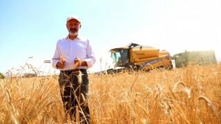 Tarımın Merkezi Kocasinan'da Ürünler Hasada Hazırlanıyor