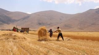 Elmalı'da ata tohumu bereketi yaşanıyor