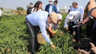 Kasketini Taktı, Yılın İlk Hasadını Çiftçilerle Birlikte Yaptı