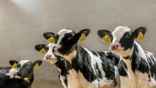 Trouw Nutrition Türkiye yaygın bayi ağı ile hayvan yetiştiricilerinin hep yanında