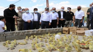 Vali Varol Projelerden Yararlanan Çiftçileri Ziyaret Etti