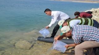 Batman Barajına Yavru Sazan Balığı Bırakıldı