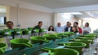 Daire Başkanı Kanyılmaz Gölköy Su Ürünleri Üretim İstasyonunda incelemelerde bulundu