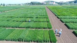 Tarım ve Orman Bakanlığı'ndan Ar-Ge projelerine 30 milyon TL destek