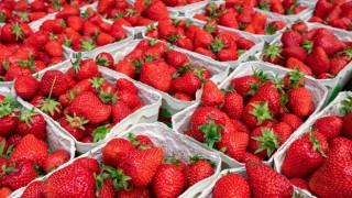 Yaş meyve sebze ihracatı son 12 ayda 3 milyar doları aşarak rekora imza attı