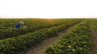 """Bayer, """"Vegetables By Bayer"""" adlı Yeni Marka Platformunu Hayata Geçirdi"""