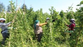 Bolu Belediyesi organik sebze-meyveleri tüketiciyle buluşturuyor
