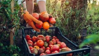 Tarım Ürünleri Fiyatları Son Bir Yılda Yüzde 25 Arttı