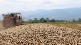 Tarımsal Girdi Fiyat Endeksi yıllık en yüksek seviyesine ulaştı