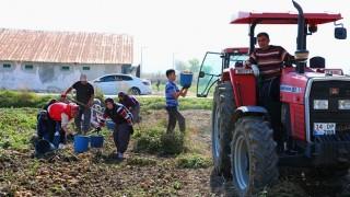 Yerli Patates Niğşah Verimiyle Üreticisini Güldürüyor