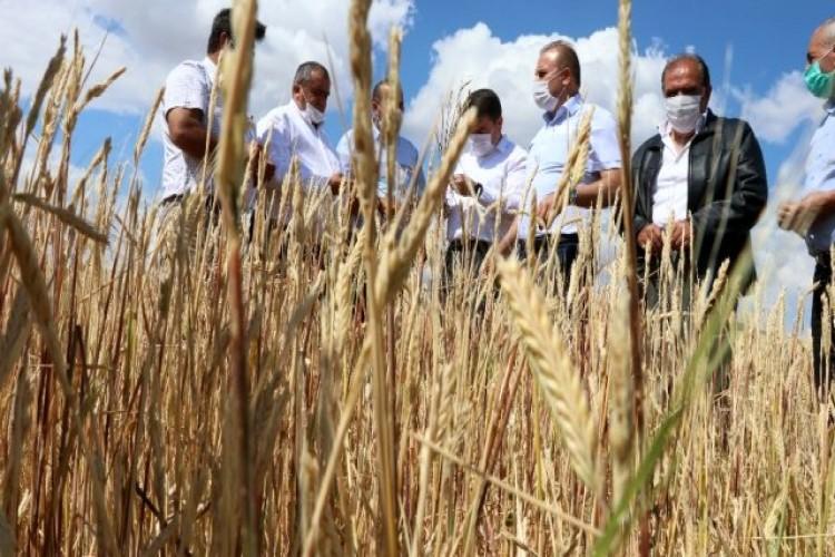 Aksaray'da dolu 70 bin dekar arazide hasara sebep oldu