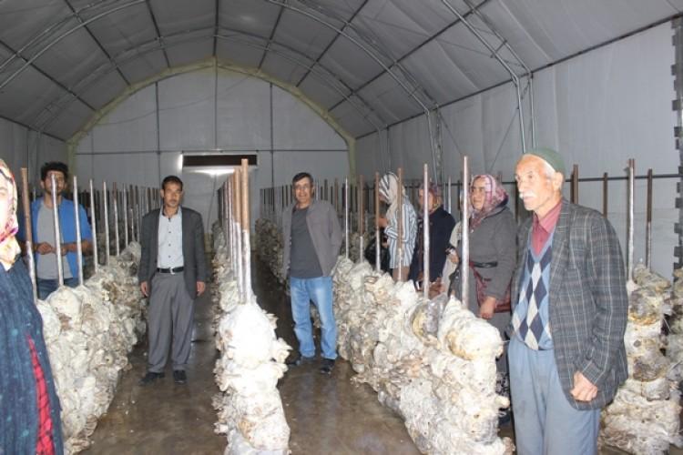 Isparta'da 5 Bin Ton Mantar Üretimi Yapılıyor