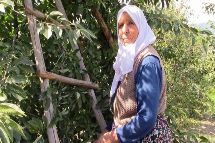 Kütahya'da vişne üreticisi çıkış yolu arıyor