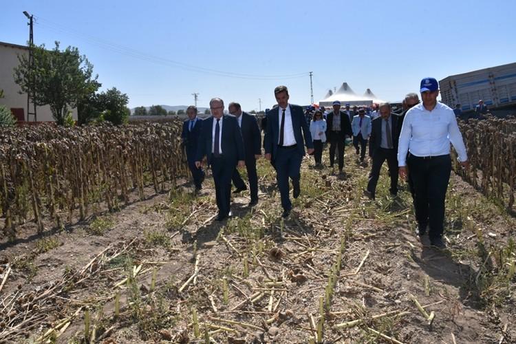 Afyonkarahisar'da Tohumluk Ayçiçeği Üretimi ve Tarla Günü Etkinliği Yapıldı