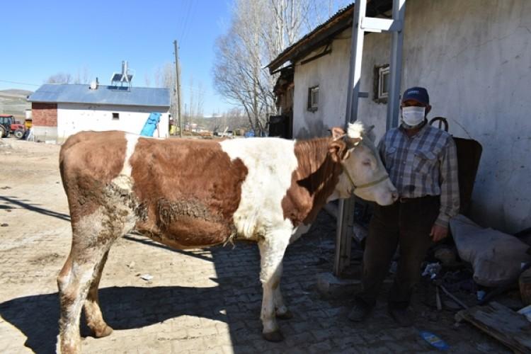 """Bayburt'lu Çiftçiler, """"Biz Bize Yeteriz Türkiyem"""" Kampanyasına Altı İnek Bağışladı"""