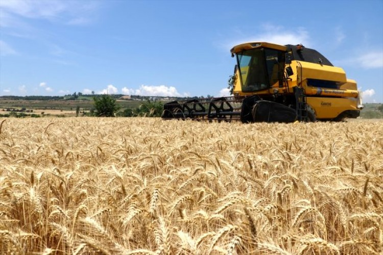Buğdayda Son 50 Yılın En Verimli Dönemi