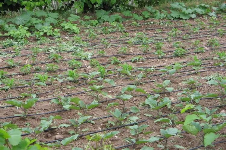 Sinop'ta Beş Çiftçiye Sulama Hibe Desteği Verildi