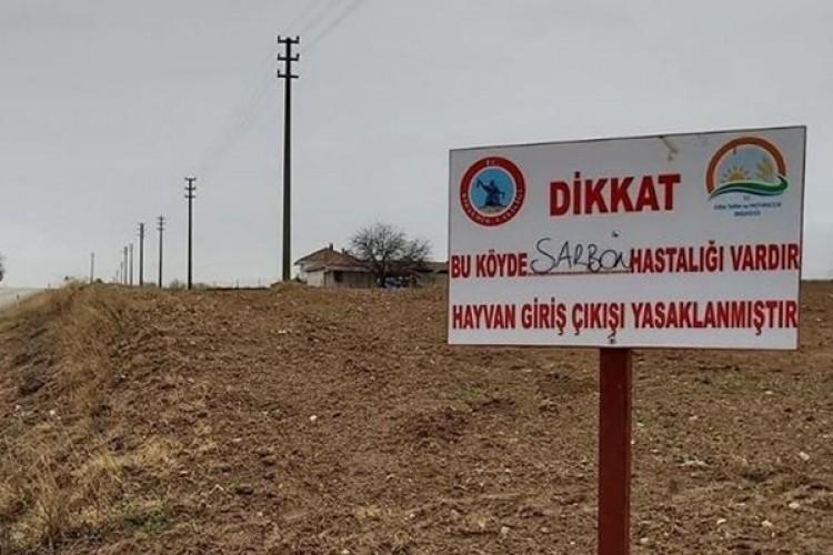 Kırşehir'de şarbon paniği! Hayvan giriş çıkışları yasaklandı