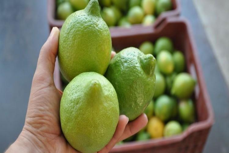 Limon fiyatına 'turfanda' ayarı