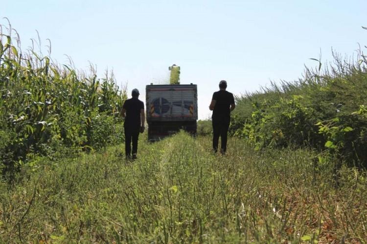 Çanakkale Silajlık Mısır Üretimi İle 8'inci Sırada