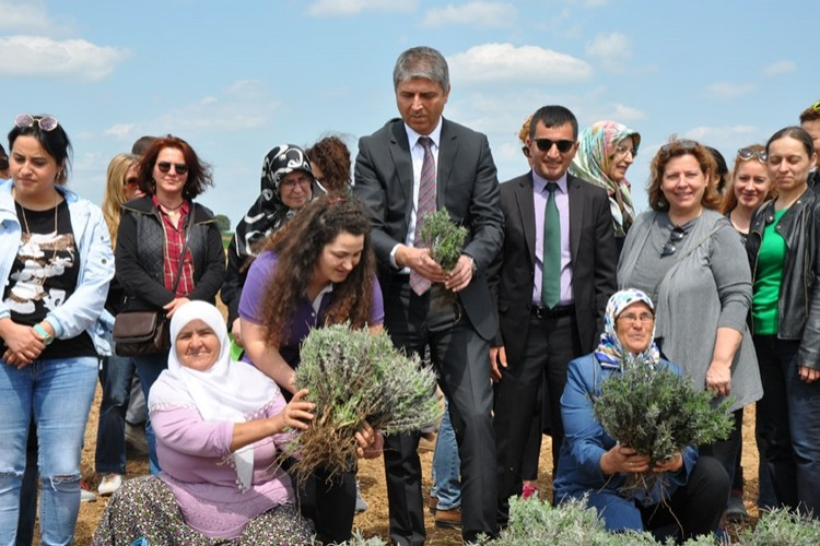 Edirne Kadın Çiftçilerle Lavanta Kokacak