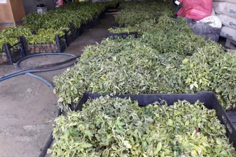 Bingöl Belediyesi'nden Üreticilere Sebze Fidesi Desteği