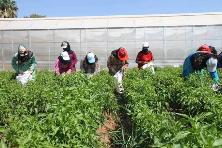 FAO, Japon projesinde üçüncü faz: İzmir ve Bursa'da yeni kooperatif, Şanlıurfa'da üretim!