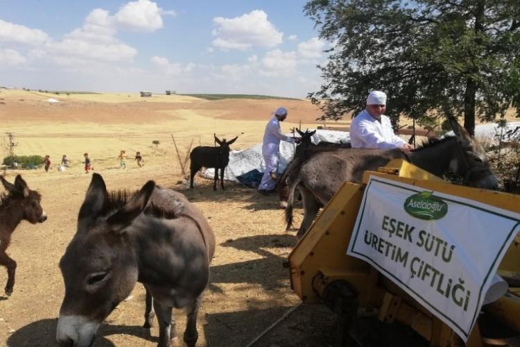 Mardin'in Ödüllü Eşek Sütü Sabunu 27 Ülkeye İhraç Ediliyor
