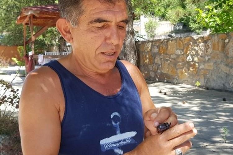 Karabük'te gergedan böceği bulundu