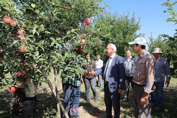 Kırıkkale'de Elma Hasadı Başladı