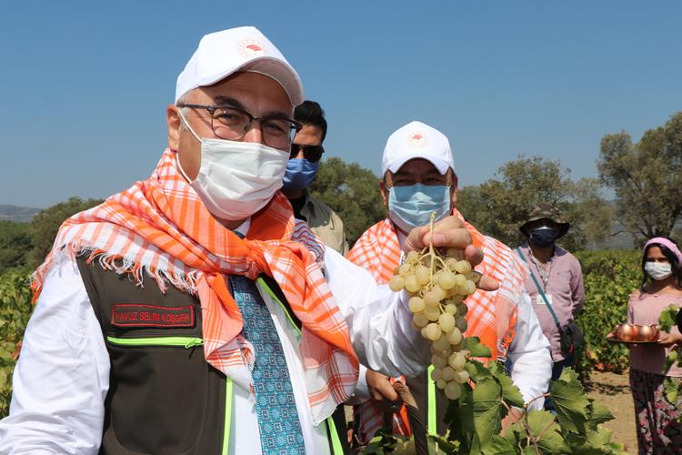 İzmir Valisi Köşger Selçuk'ta üzüm ve nar hasat etti, muz fidanı dikti