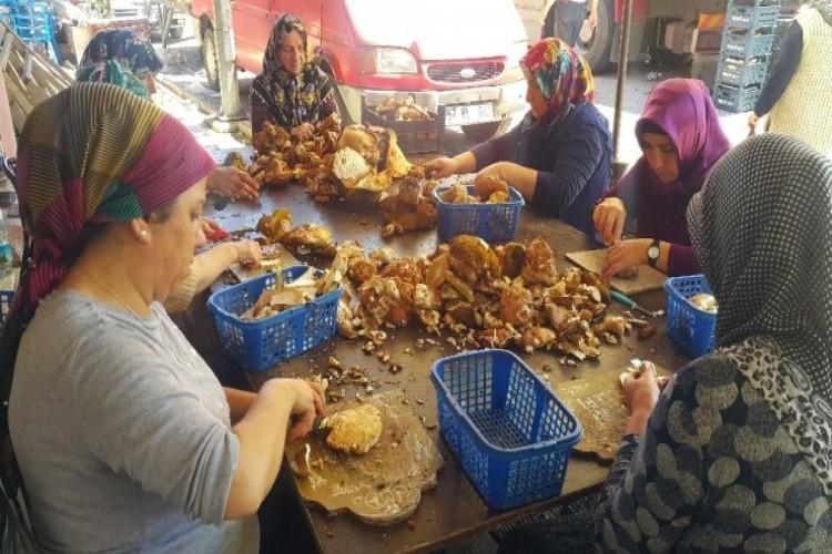 'Sinop mantarı' Avrupa mutfağının baş tacı